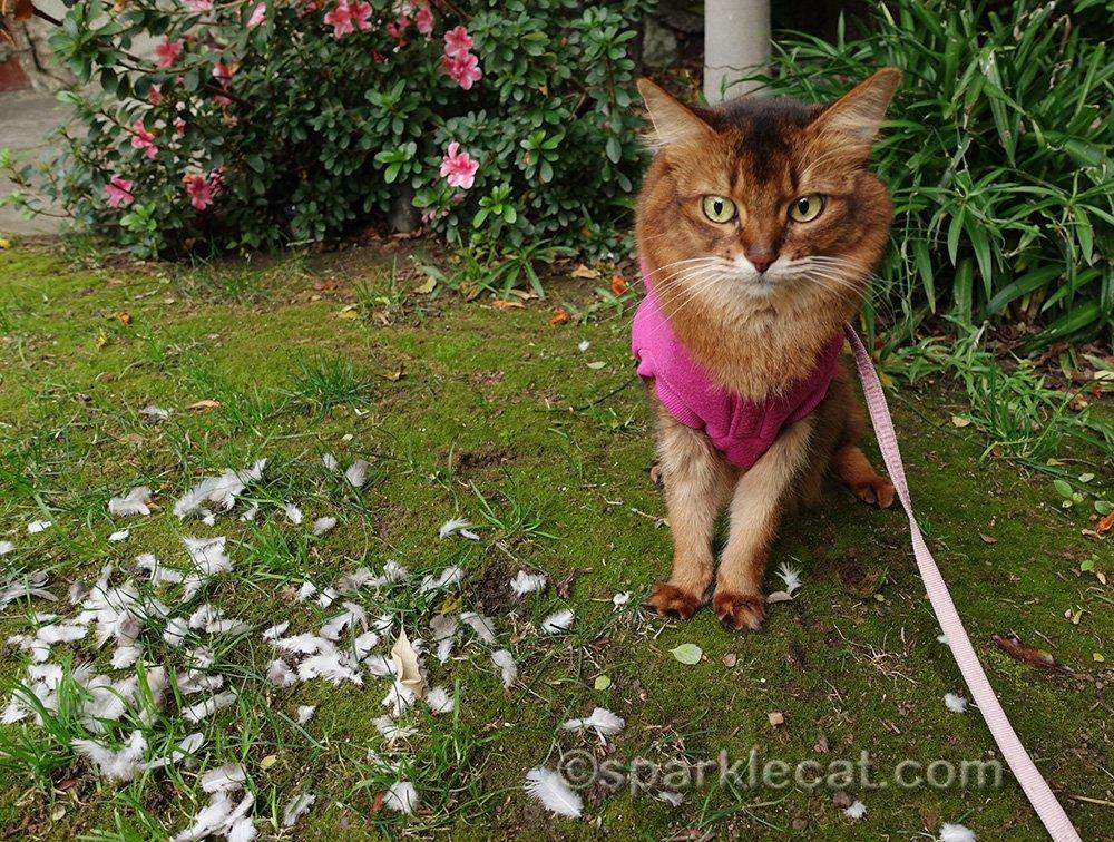somali cat horrified by scene of bird murder