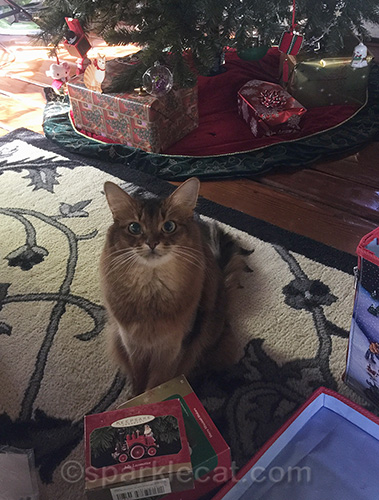 somali cat helping pack up christmas ornaments