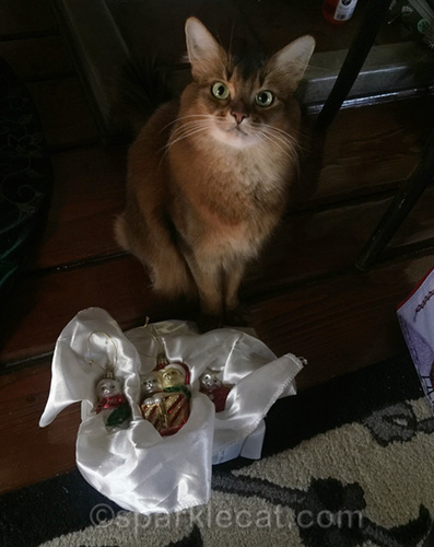 somali cat with cat christmas ornaments