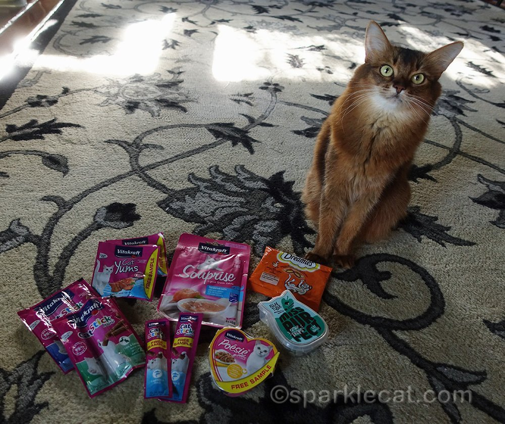 somali cat with cat treats from Sweden