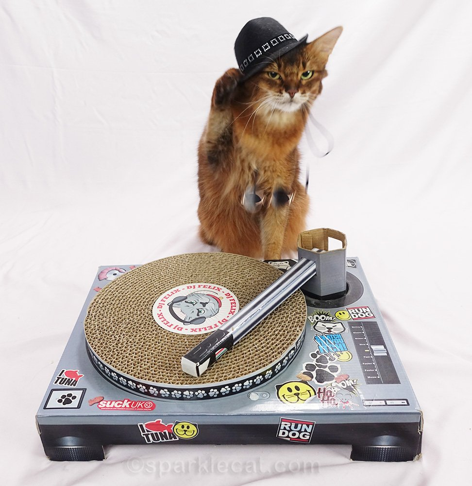 somali DJ cat in fedora, knocking off sunglasses