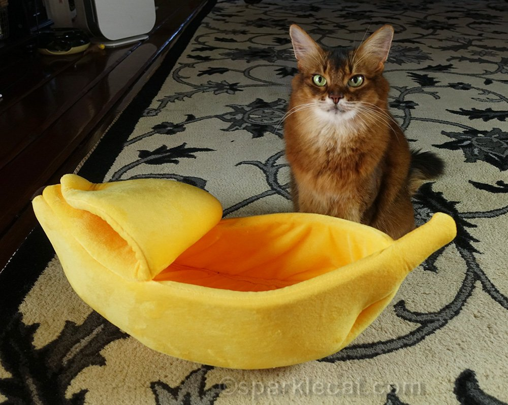 Summer gets a new banana boat cat bed... but it is a little on the small side