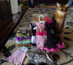 Getting Ready for the San Diego Cat Show