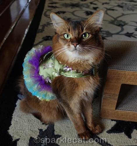 somali cat in pretty green dress with purple tulle