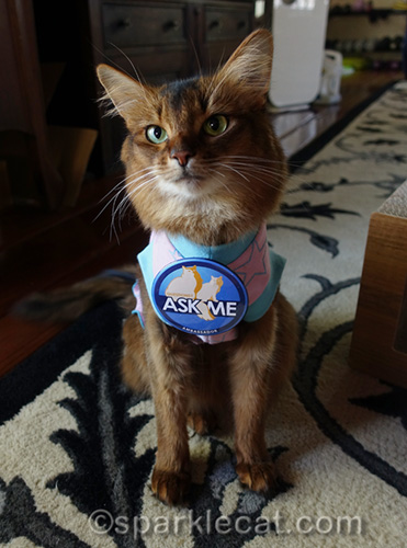 somali cat wearing CFA Ambassador Ask Me button