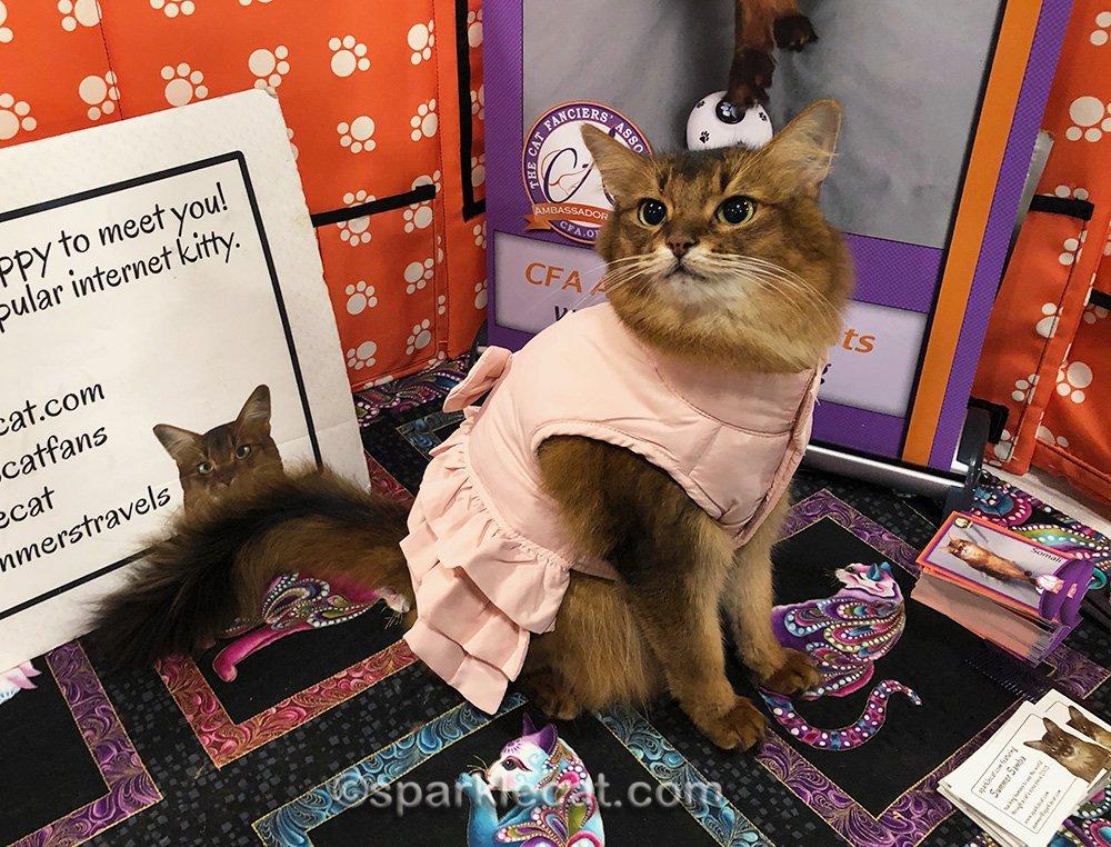 somali cat wearing puffy pink jacket dress