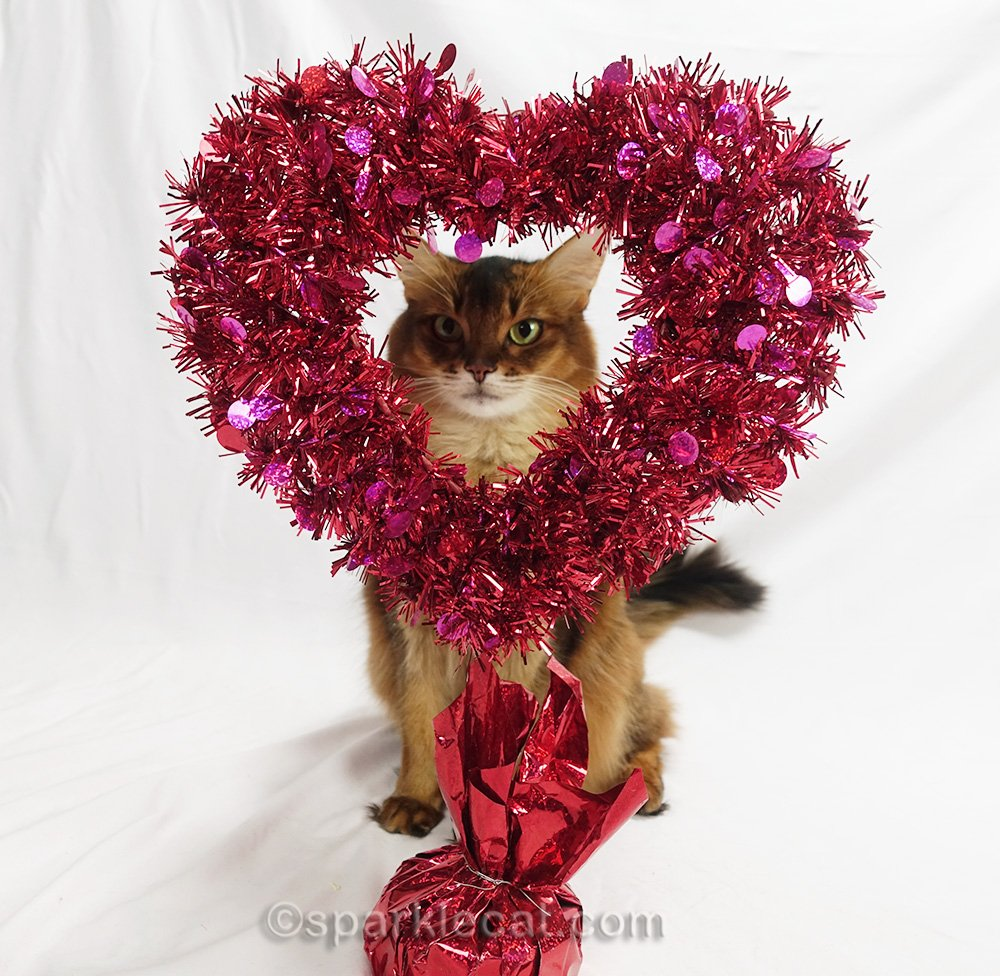 Summer does a Valetine's Day cat photo session with a decorative heart... and it does not go as expected.