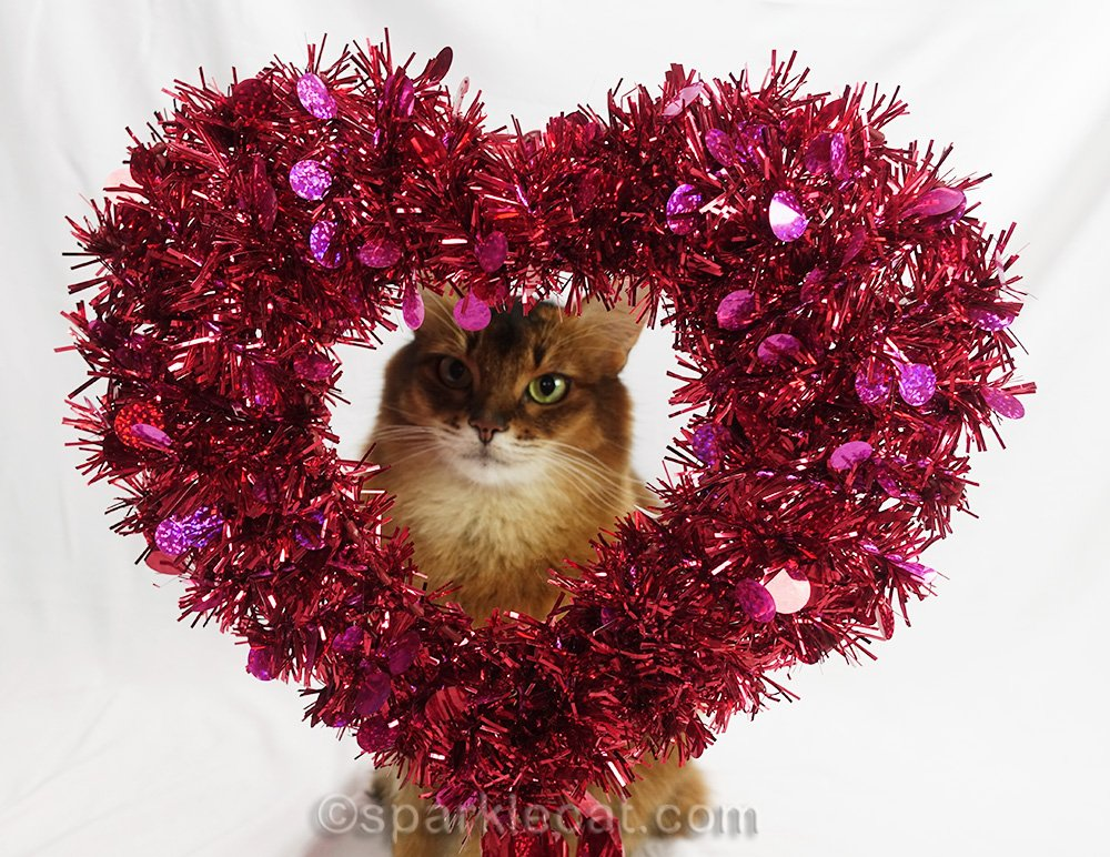 slightly out of focus somali cat sitting behind decorative heart