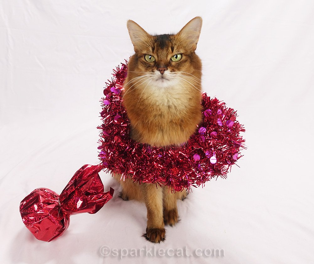 somali cat caught in decorative heart