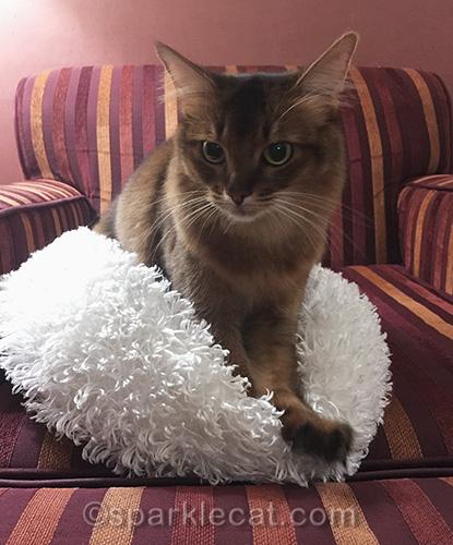 somali cat in her own bed