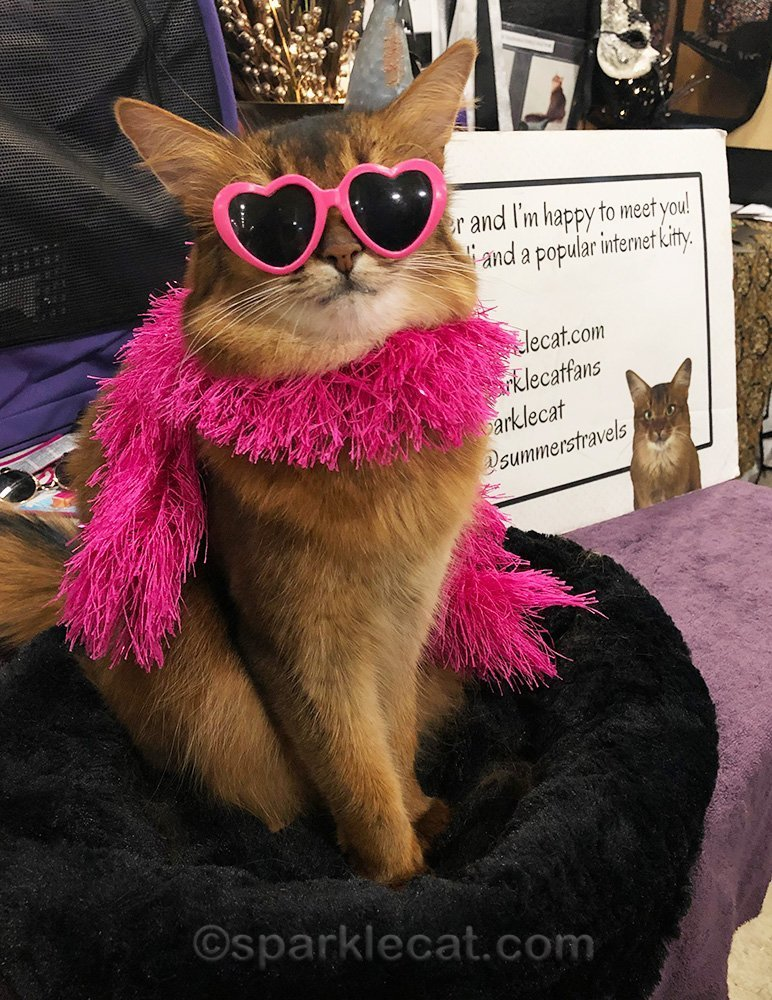 somali cat in pink boa and heart sunglasses