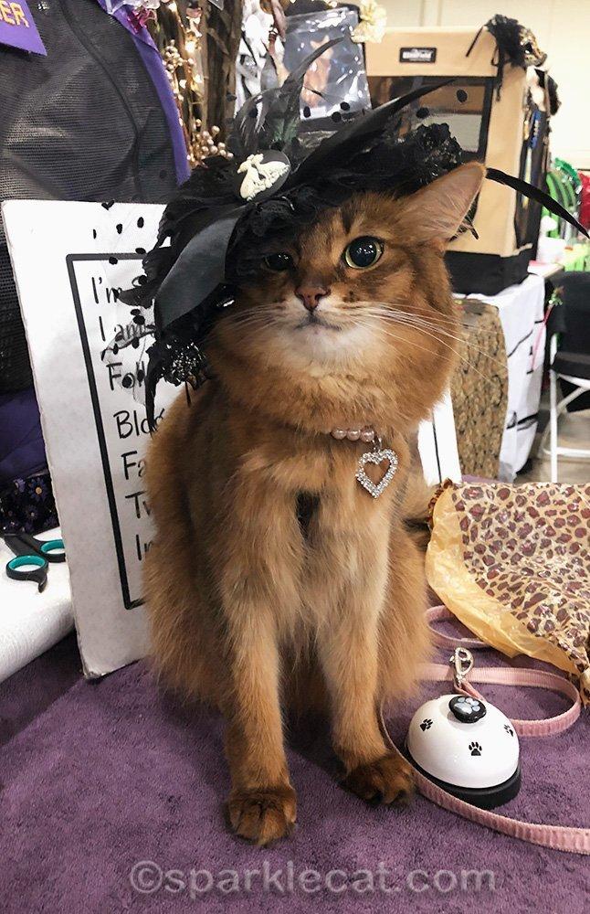 somali cat wearing fancy black hat