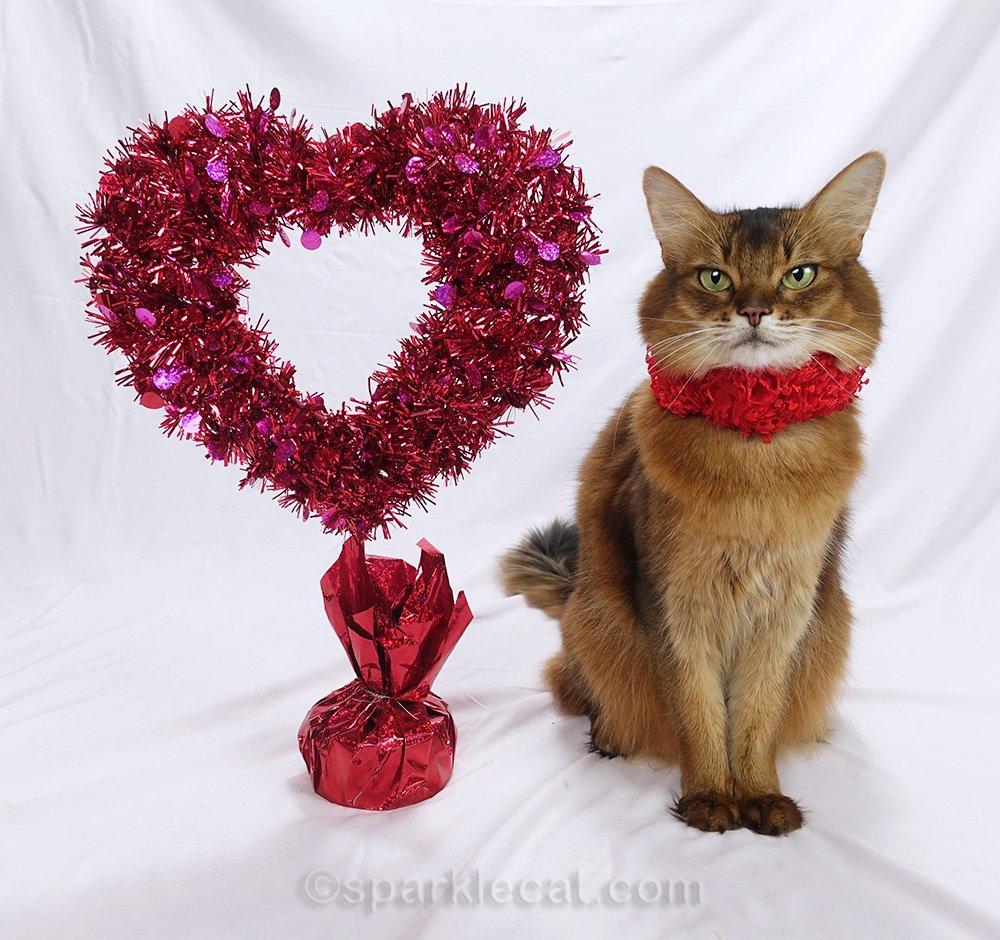 somali cat in unused Valentine's Day photo session
