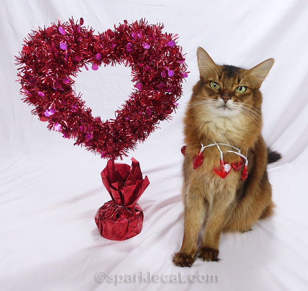 somali cat wearing a string of heart lights