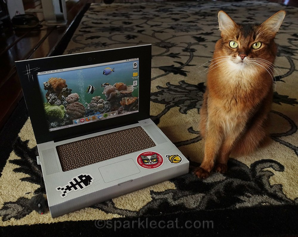 somali cat posing with her new laptop scratcher