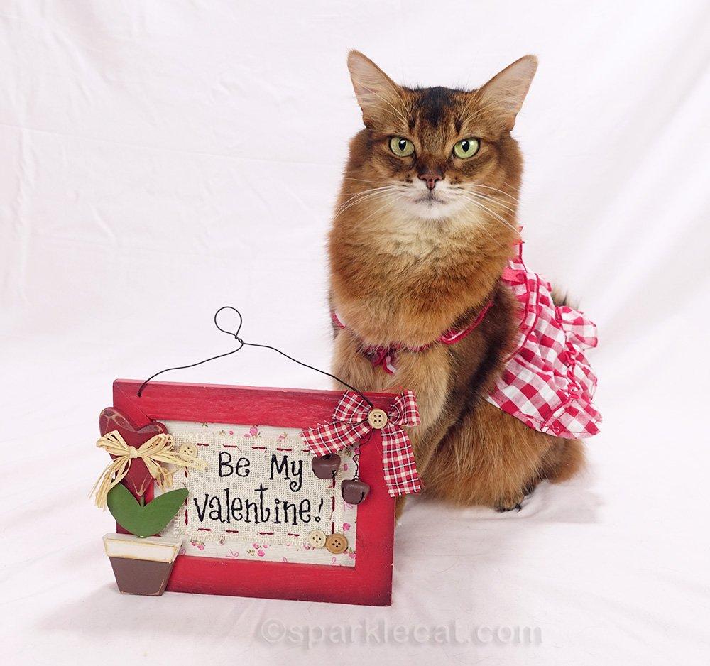 somali cat with valentine sign