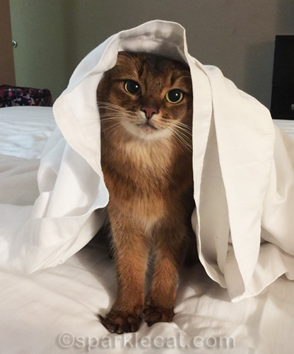 outtakes and extras of somali cat