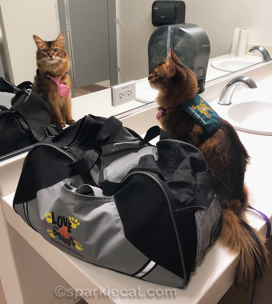 therapy cat in ladies room at children's hospital