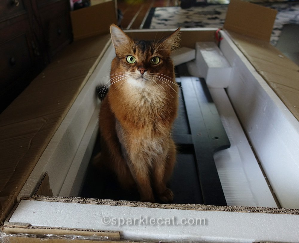 somali cat sitting in box with pieces of media cabinet