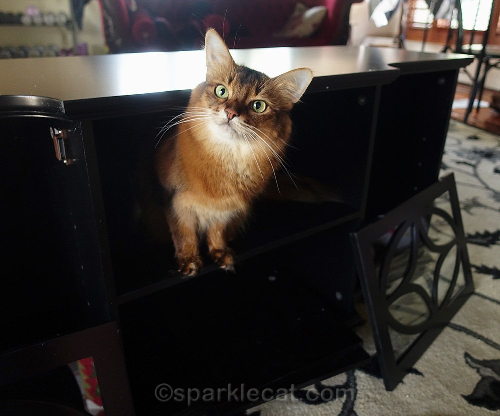 Somali cat supervising media cabinet assembly