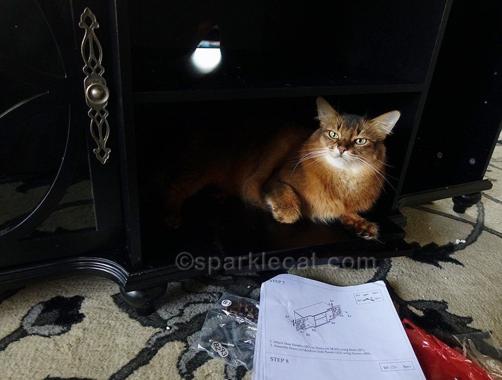 somali cat with instructions for media cabinet assembly