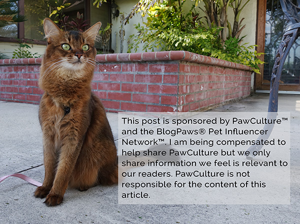 somali cat outdoors and disclosure