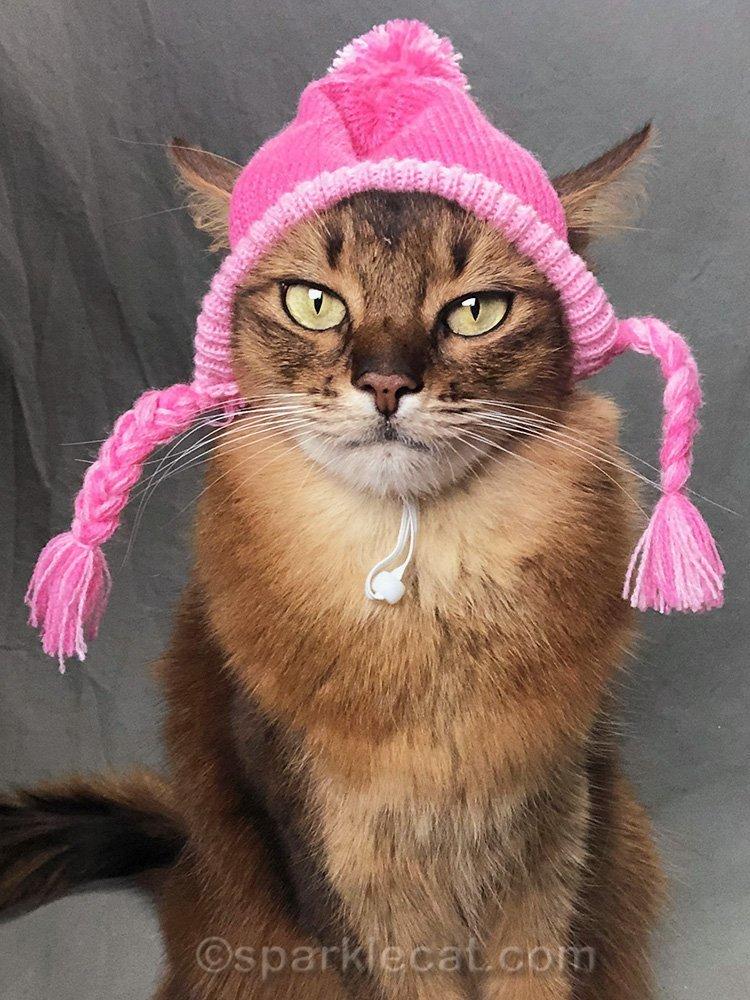 somali cat selfie in knit cap