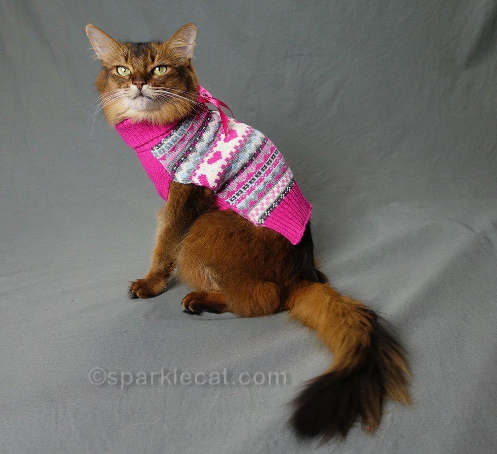 somali cat wearing pink sweater