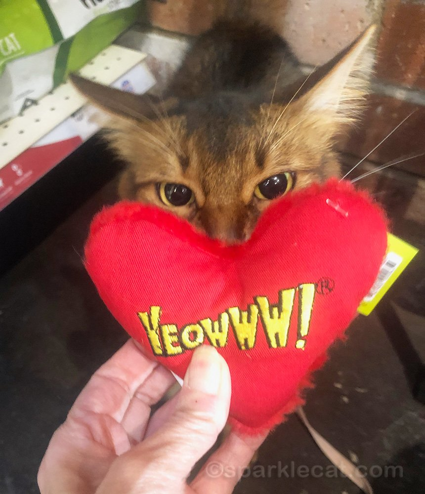 Somali cat checking out Yeowww! catnip heart