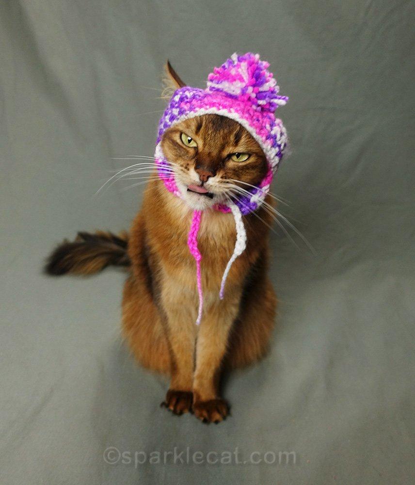 slightly naughty somali cat in Chullo hate