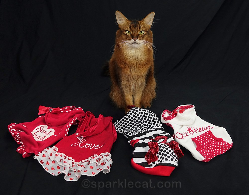 somali cat with her Valentine hoodies