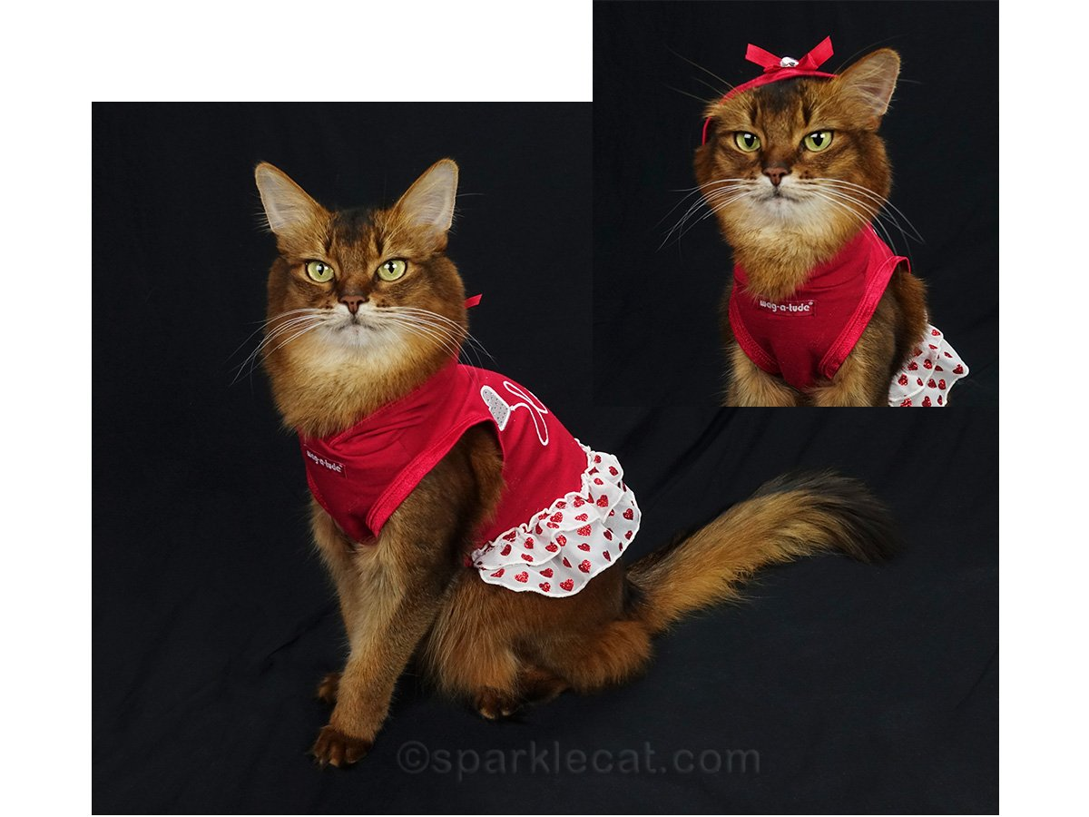 somali cat with cute Valentine hoodie dress