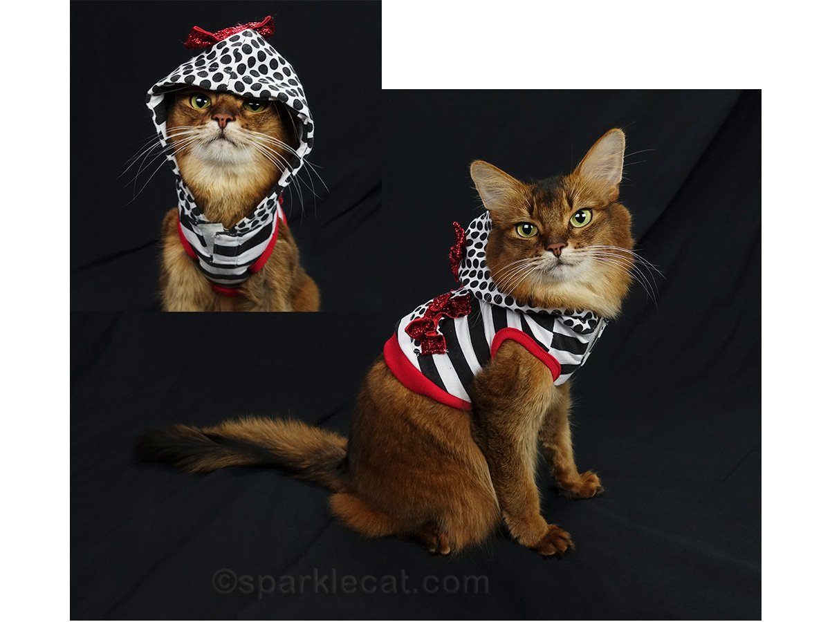 somali cat wearing unusual valentine hoodie