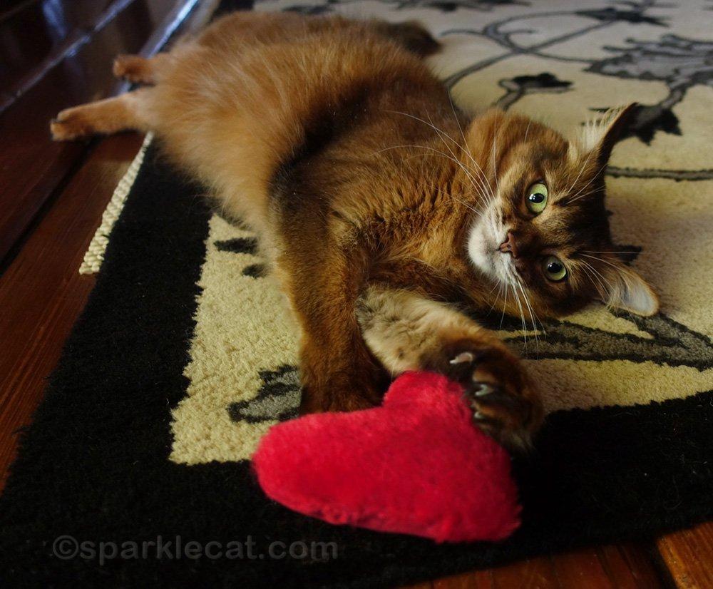 Somali cat digs claws into catnip heart