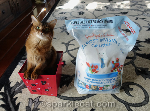 somali cat in Valentine's Day box with bag of Almost Invisible Cat Litter
