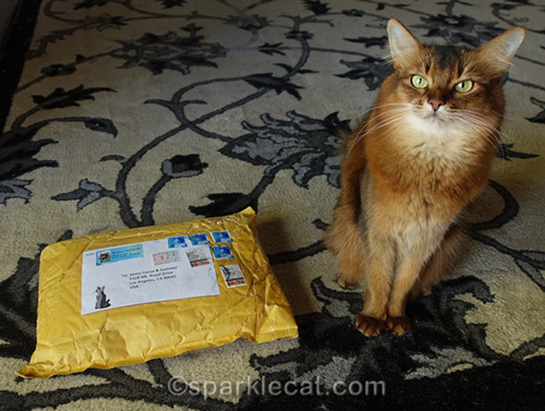 somali cat with package from Sweden