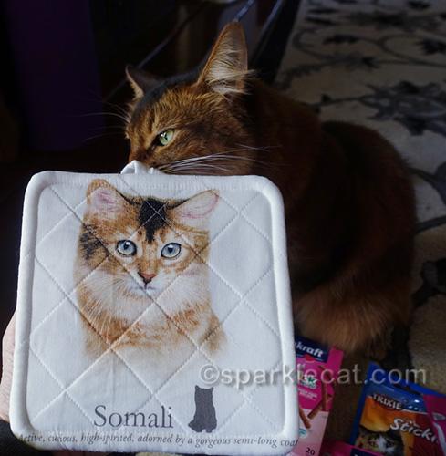 somali cat checking out somali cat potholder
