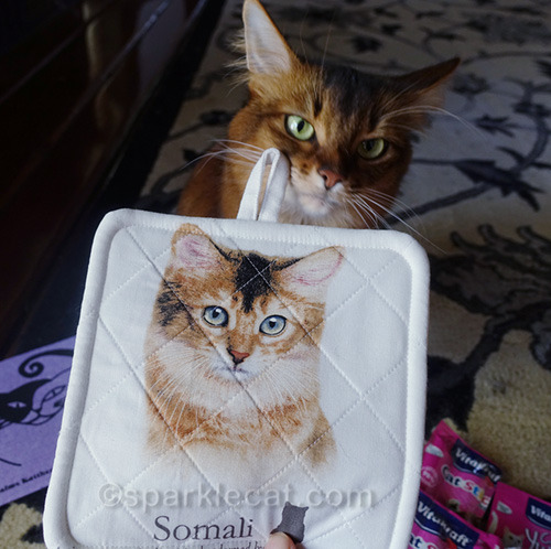 somali cat posing with somali cat potholder