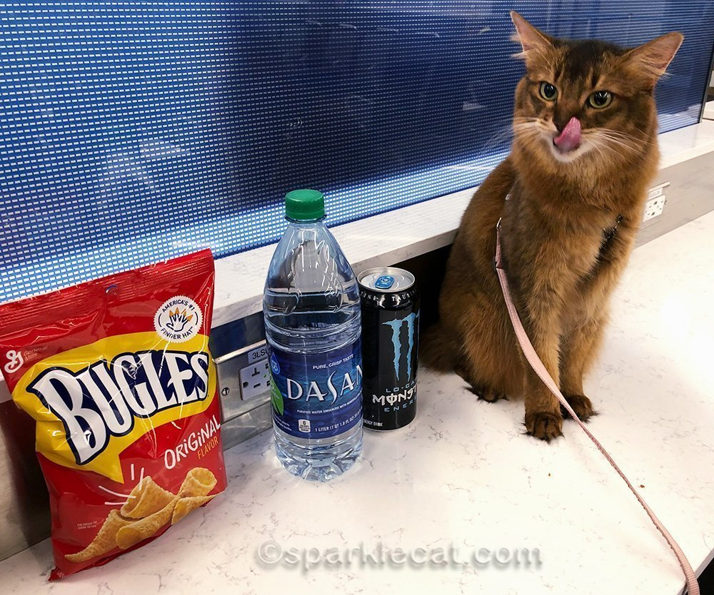 somali cat traveling to Newark from LAX