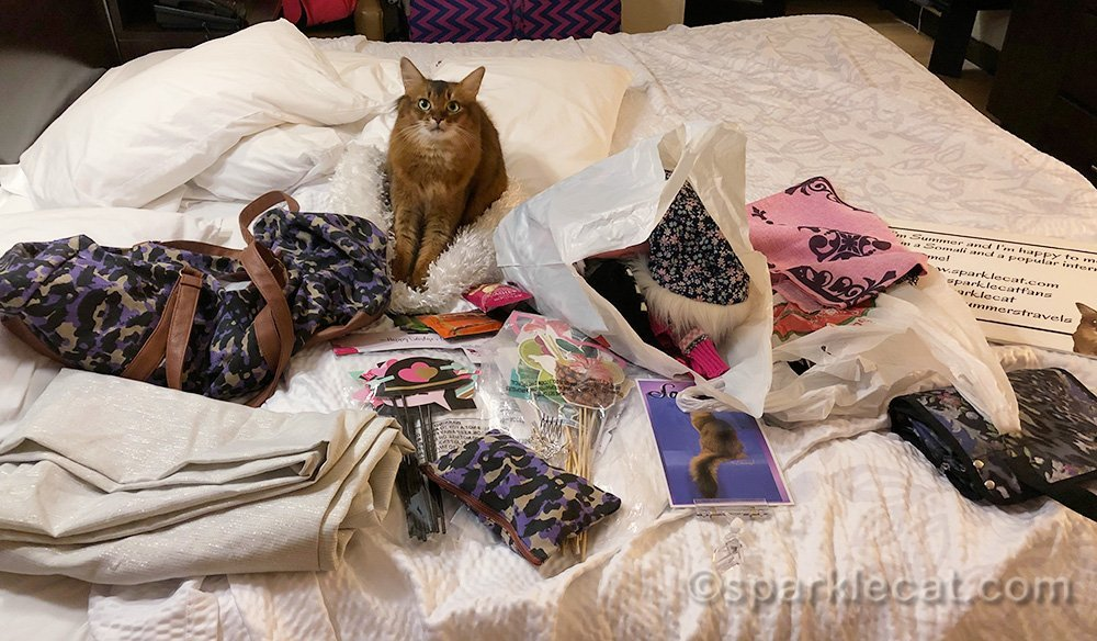 somali cat surrounded by stuff to pack for Meet the Breeds