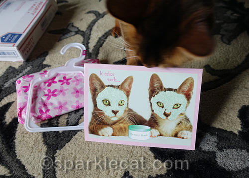 card of two kitties giving themselves facials