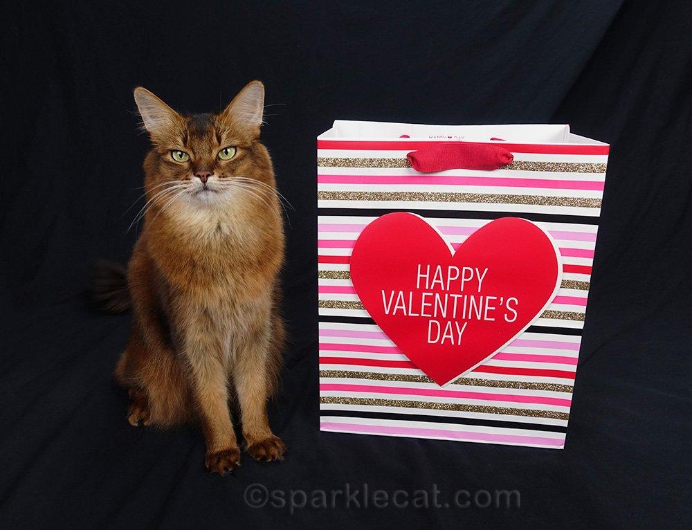 somali cat with Happy Valentine's Day bag