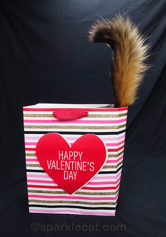 somali cat in Valentine's bag with just tail sticking out