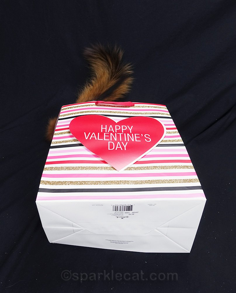 Somali cat in Valentine's bag that fell over