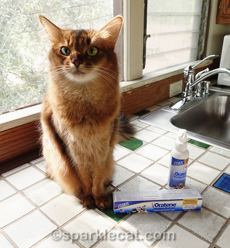somali cat with Oratene brushless toothpaste gel and spray
