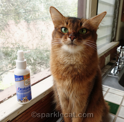 somali cat posing with Breath Freshener Spray