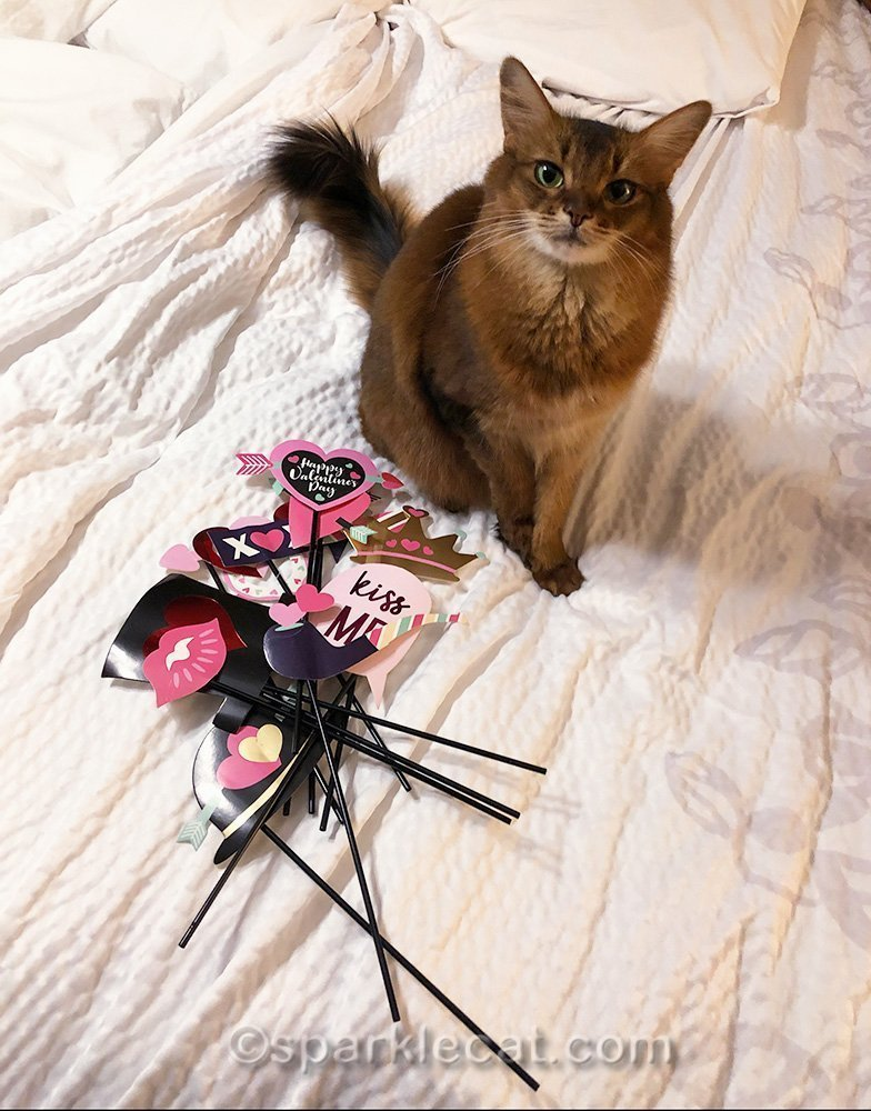 somali cat with Valentines Day selfie props