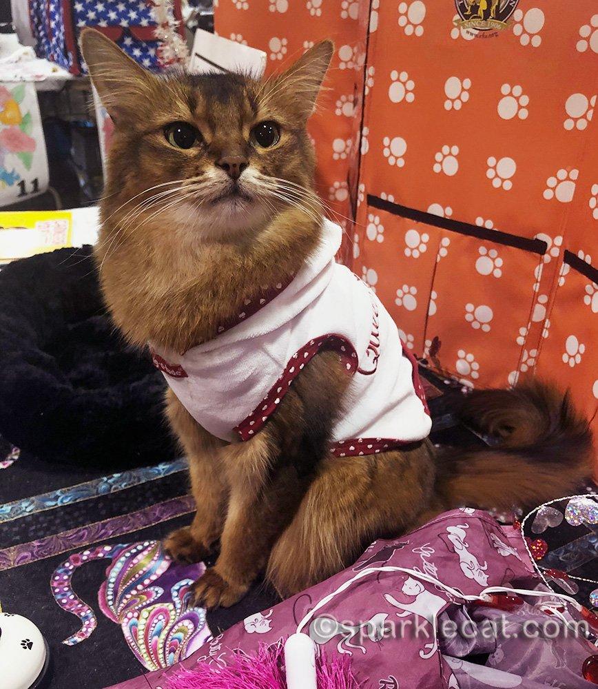 somali cat in Queen of Hearts hoodie