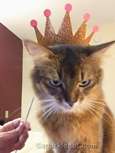 somali cat getting ready to take selfie with crown selfie prop