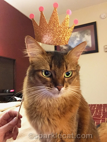somali cat wearing selfie prop crown with dignity